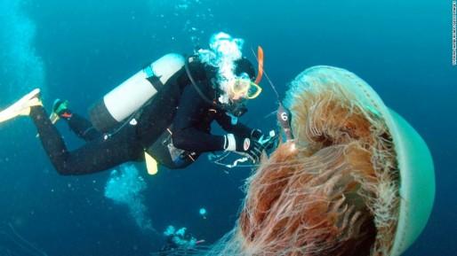 131029112752-7-jellyfish-echizen-horizontal-large-gallery